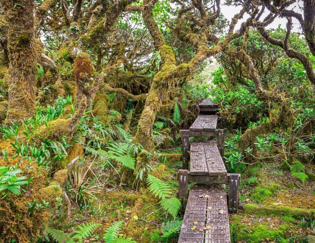 Boardwalk through Pu'u Kukui Watershed Preserve