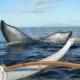 Canoe Whale Tail Ama
