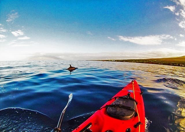 Dolphin and Kayak