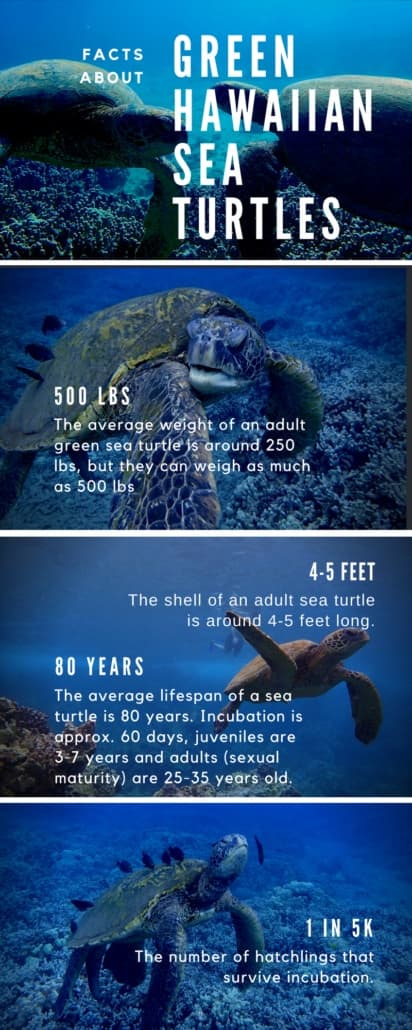 FACTS ABOUT THE GREEN HAWAIIAN SEA TURTLE