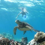 Hawaiian Outrigger Canoe Tour w/ Green Sea Turtles