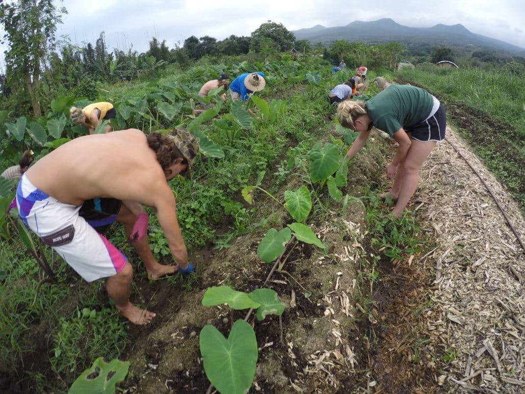 Hawaiian Paddle Sports team volunteering at a community garden in Hana