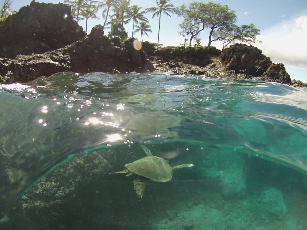 sea turtle Makena Landing