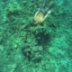 Snorkeling West Maui