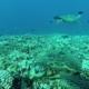 turtles over reef in honolua bay