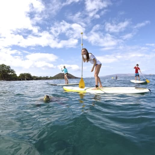Stand Up Paddle Maui with Turtle