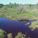 La'ie Wetlands Clean Up Event Page