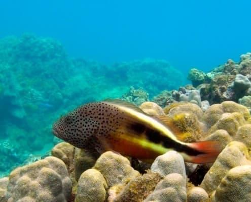Highlights of Honolua Bay