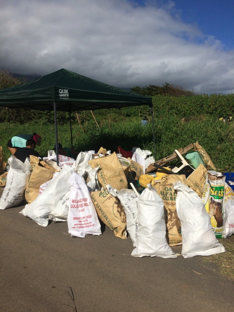 Over 100 Bags of Rubbish Collected during Beach Cleanup