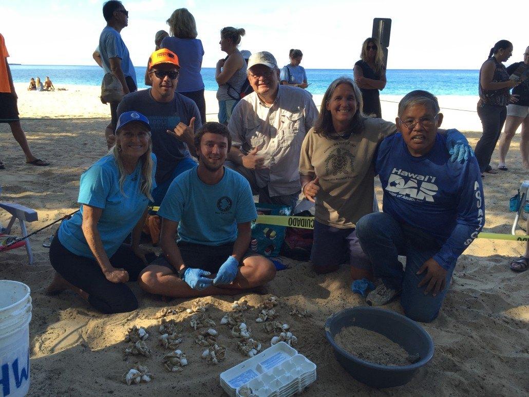 hawaiian paddle sports volunteer hawksbill turtles