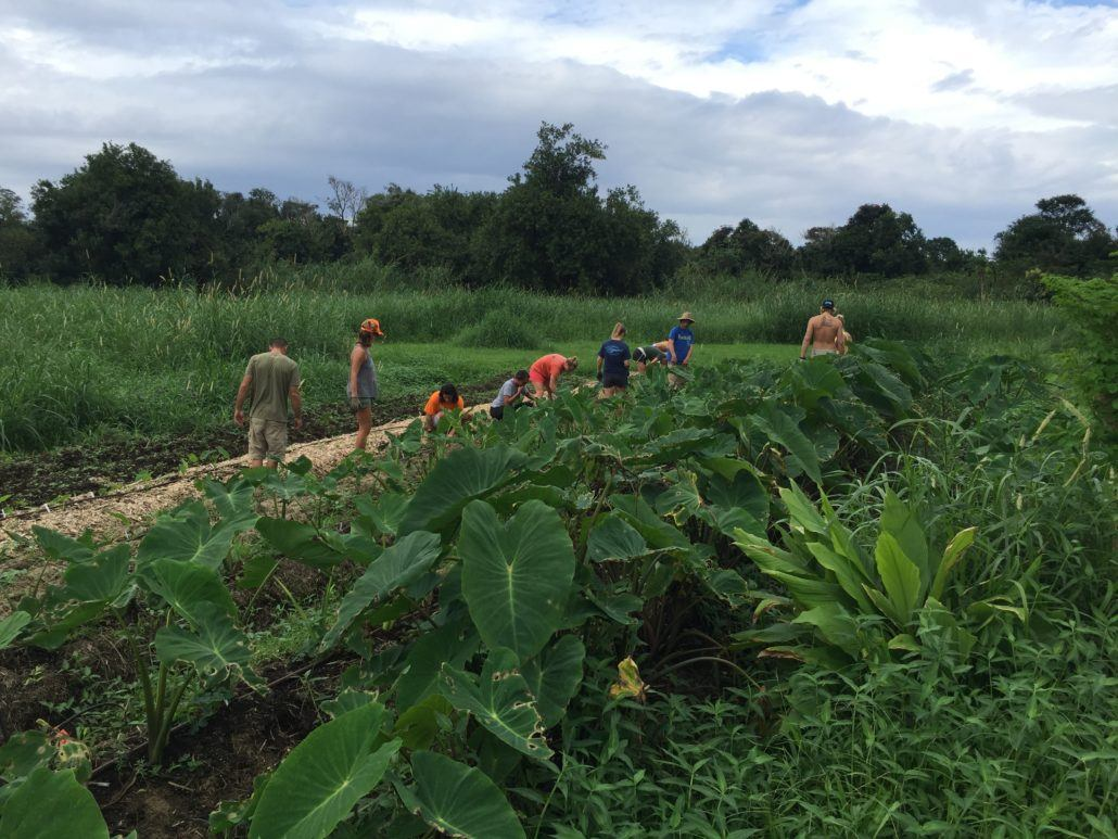 Farming in Hana Hawaii