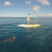 Stand Up Paddle Boarding In Kapalua Maui