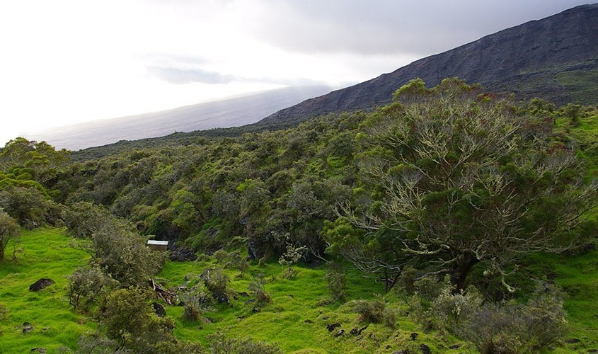 Kaupo-at-4000-elevation