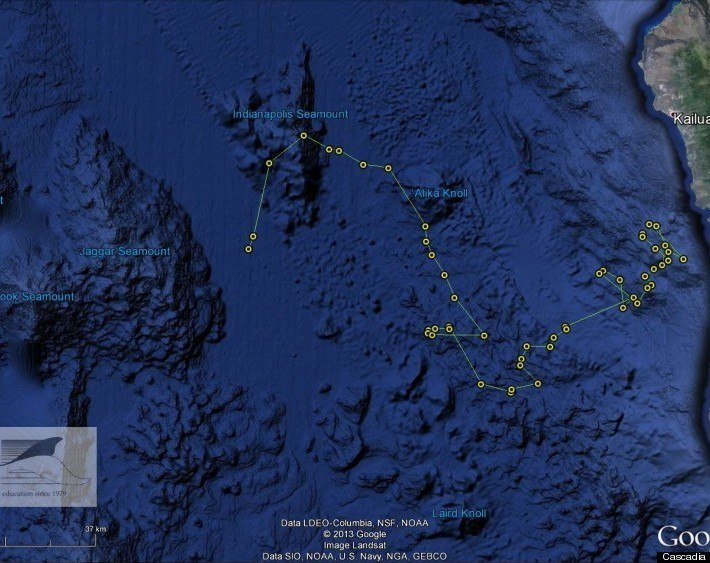Tracking of Killer Whales in Hawaii