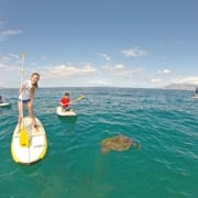 Turtle Town Stand Up Paddling