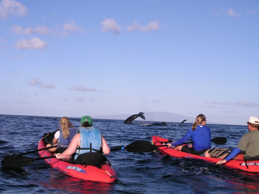 Maui Whale Watching Tours Kayak Canoe Sup