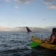 Makena Kayaking Whale Watching