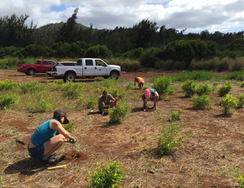 Part of our day's work included replanting species within the preserve