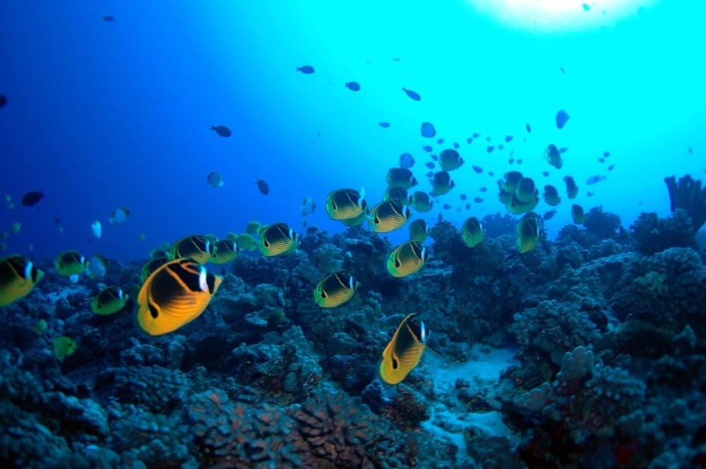 Molokini marine species