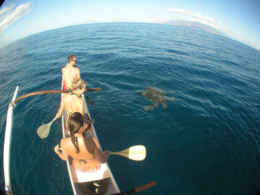 Outrigger Canoeing with Sea Turtles