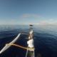 Baby Whale Breach Maui