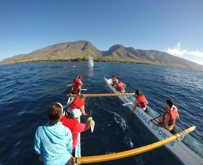 Hawaiian Paddle Sports raised funds for Whale Trust Maui with outrigger canoe tours