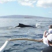 West Maui Canoe Whale Watching