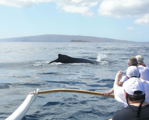 West Maui Canoe Whale Watching