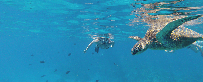Olowalu Snorkel Female With Turtle
