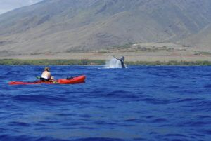 Olowalu Whale Single Kayak