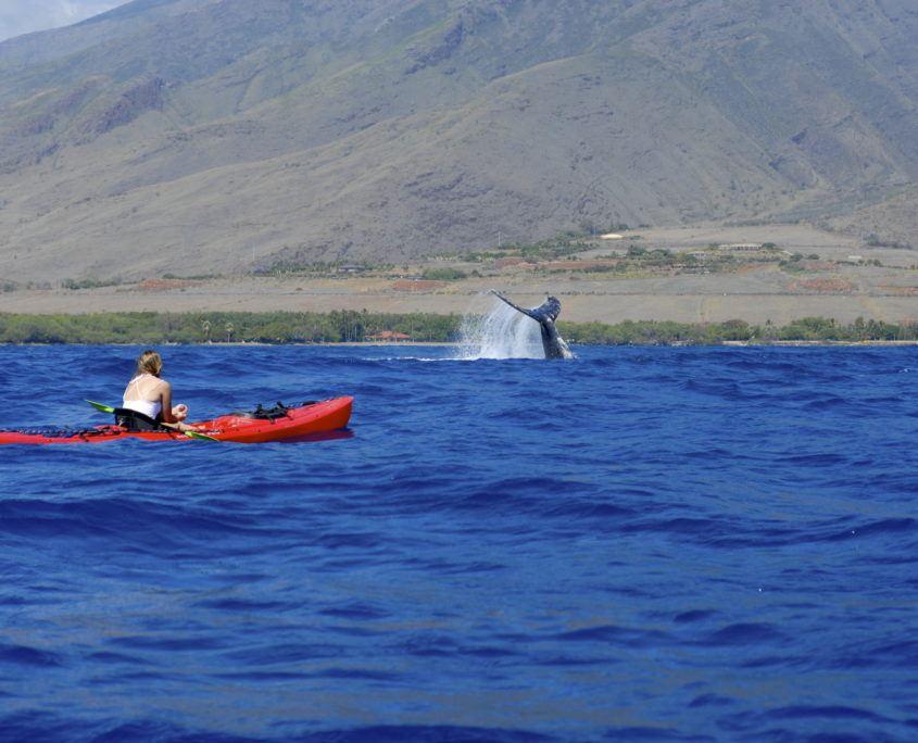 Olowalu Whale Fluke Kayak