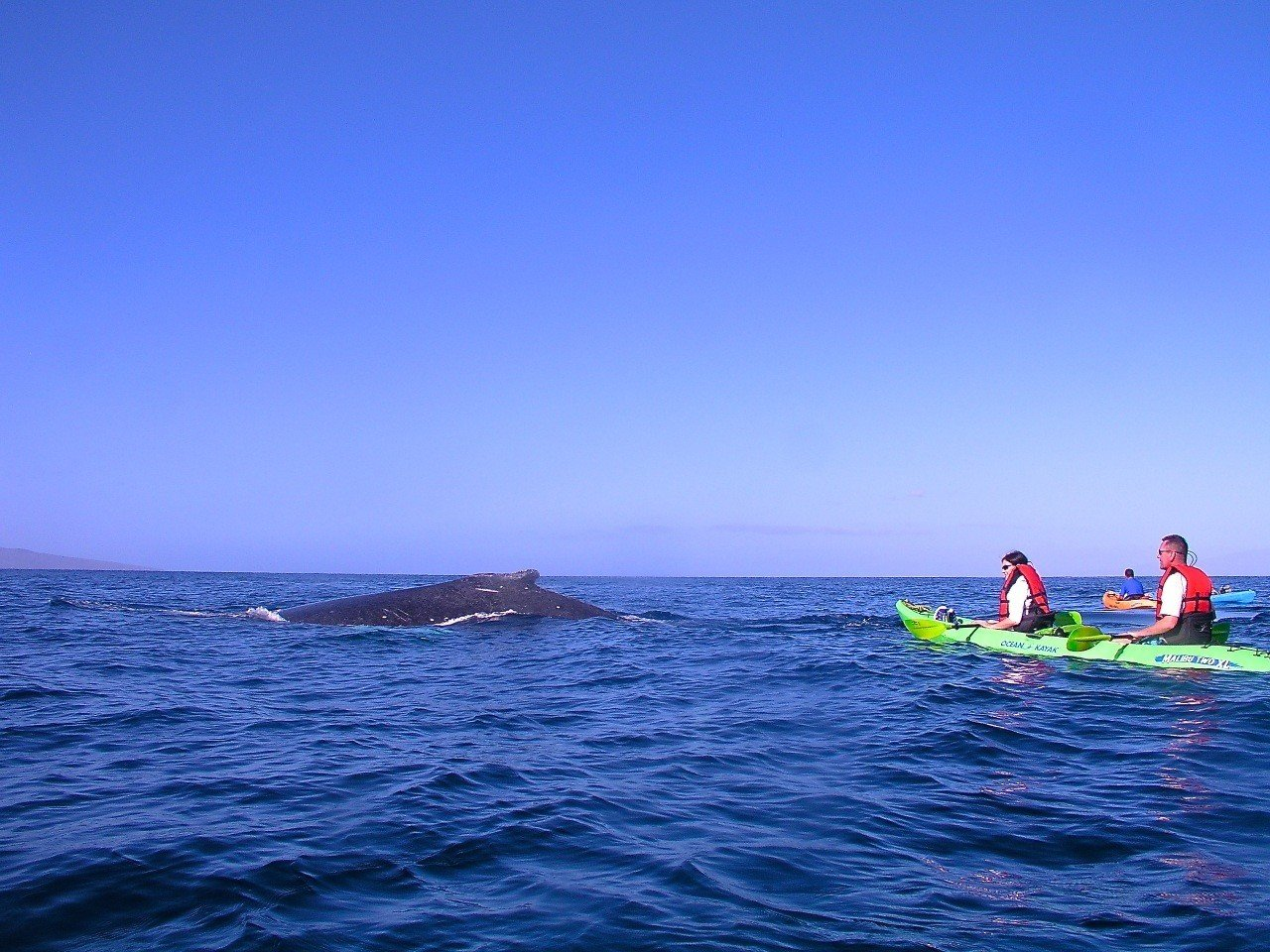 Humpback whale whale visits these kayak paddlers.