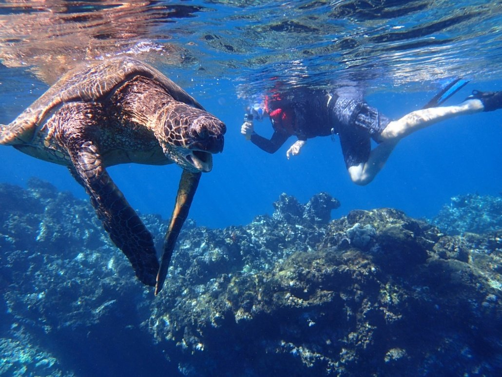 snorkeling with sea turtles in maui