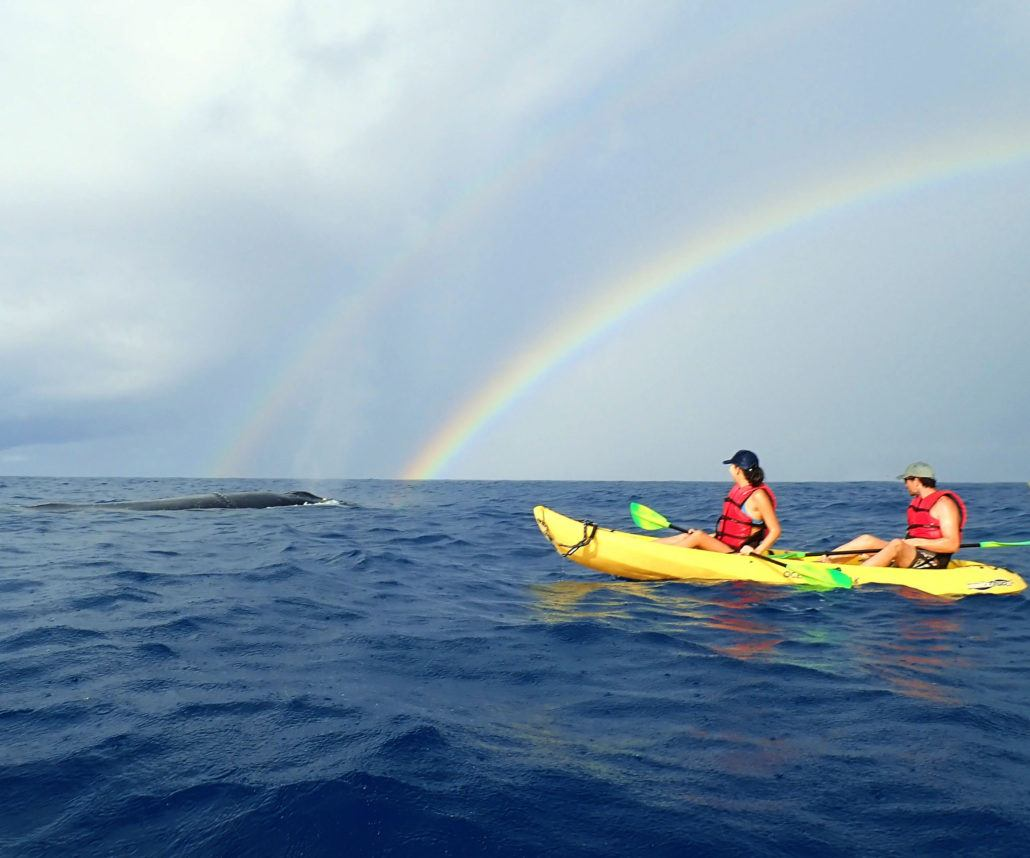 Kayak Whale Watch tour in Maui Hawaii