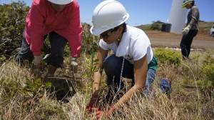 2014 Fellows: Restoration at the windmills