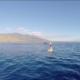 Whale Fluke Maui