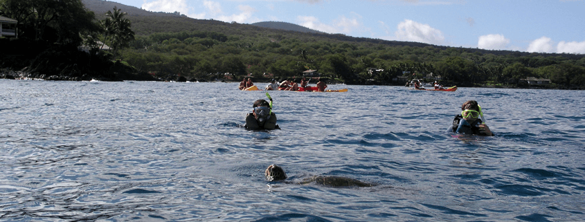 Turtle 2 Snorkelers Heads Above Water