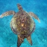 TurtleColorfulShell