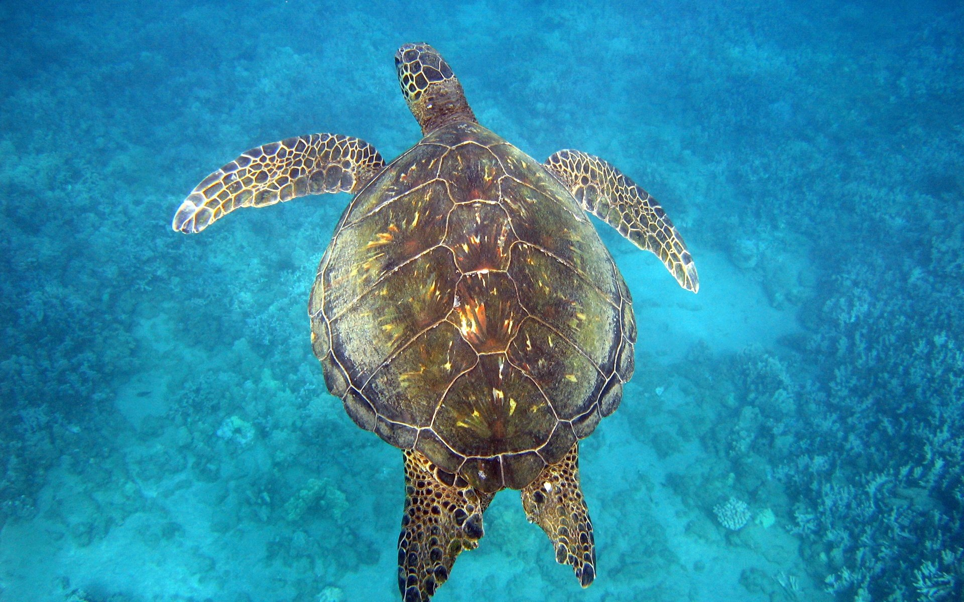 sea turtles Sea turtle recovery, their efforts, and how to donate to the sea turtles' care can  be found by visiting seaturtlerecoveryorg to contact sea turtle recovery at the .