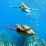 Swim with Sea Turtles