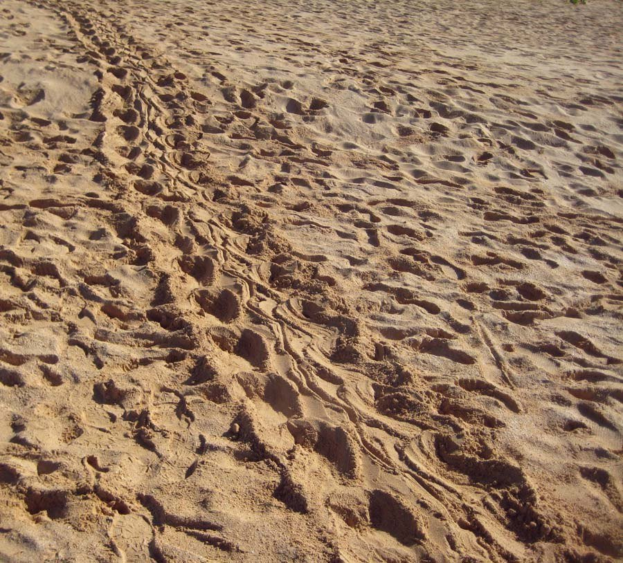 Hawksbill Tracks at Big Beach