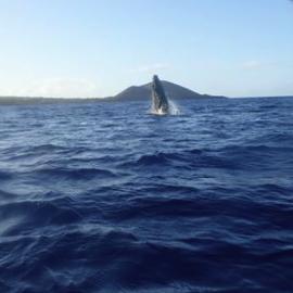 Humpback Whale Came Close