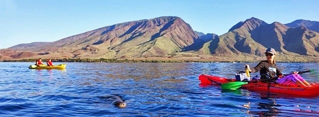 Kayaking with Hawaiian Monk Seal
