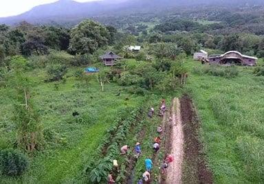 Mahele Farm