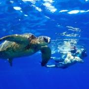 Turtle Town snorkeling Maui