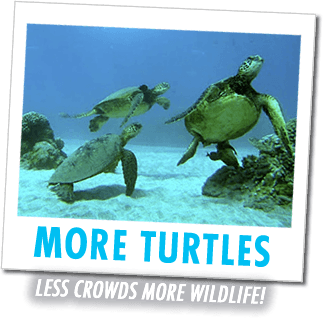 visit turtle town