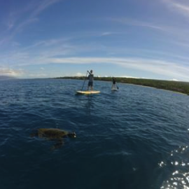 Maui Stand Up Paddle Tour Turtle