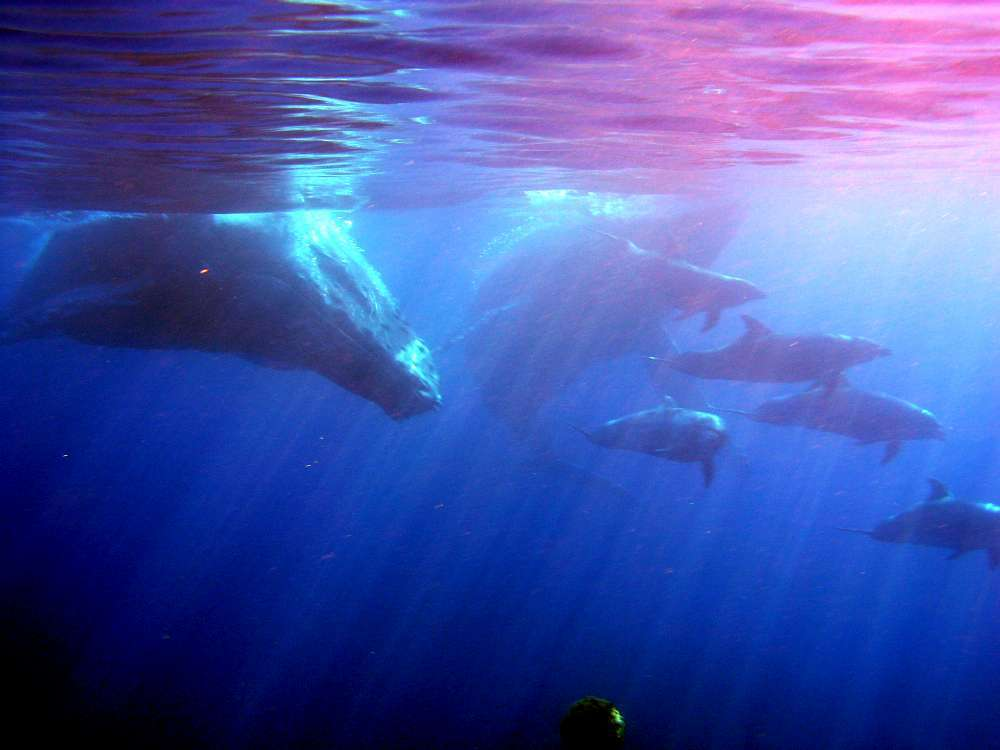 colorful water with humpback whales