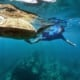Snorkeling with turtles at molokini