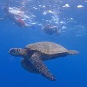 Best Turtle Snorkeling In Maui